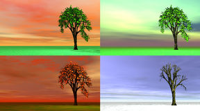Baum mit vier Jahreszeiten Stockfotografie
