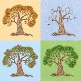 Baum mit vier Jahreszeiten Stockbilder