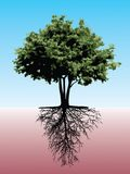 Baum mit Wurzeln Lizenzfreies Stockbild