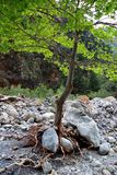 Baum mit Wurzeln Stockfotografie