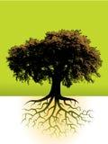 Baum mit Wurzeln   Stockfotos