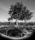 Baum mit Wurzeln und Bau Stockfoto