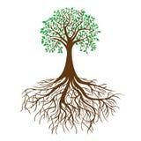 Baum mit Wurzeln und dichtem Laub, Vektor Stockfotos