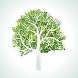 Baum mit Zweigen und Blättern Stockfotos