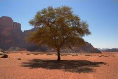 Baum mitten in Wüste Stockfotografie
