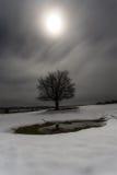 Baum am Mondschein Lizenzfreies Stockfoto