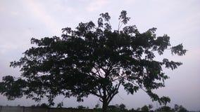 Baum morgens stockbild