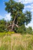 Baum nach Blitzschlägen Lizenzfreie Stockbilder