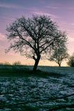 Baum nach erstem schmelzendem Schneefall stockbilder