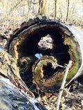 Baum nach innen Lizenzfreies Stockbild