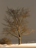 Baum nachts Stockbild
