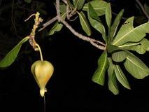 Baum nachts Lizenzfreie Stockfotografie