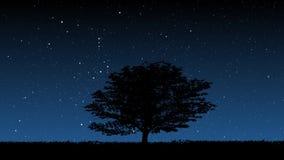 Baum nachts stock footage