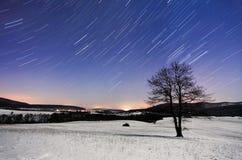 Baum nachts - Winter mit Sternen Stockbild