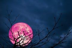 Baum-Nachtwolke der super rosa Mondrückseitenschattenbildniederlassung trockene Stockfotos