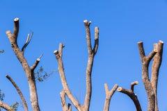 Baum-nackte Niederlassungen blau Stockfotos
