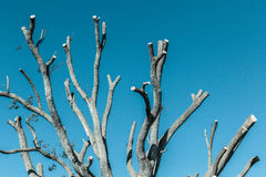 Baum-nackter Niederlassungs-Kälte-Ton Lizenzfreie Stockfotos