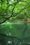 Baum nahe dem Fluss Stockbild