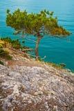 Baum nahe dem Meer Lizenzfreies Stockfoto