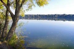 Baum nahe dem See lizenzfreies stockbild