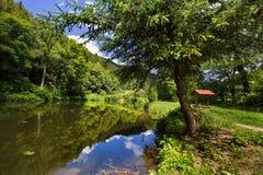 Baum nahe dem Teich Lizenzfreie Stockbilder