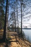 Baum nahe dem Wasser von Fluss am sonnigen Frühlingstag Stockfotografie