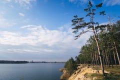 Baum nahe dem Wasser von Fluss am sonnigen Sommertag Lizenzfreie Stockfotos