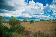Baum-nahe gelegene Brisbane-Stadt in Queensland, Australien Australien ist ein Kontinent, der im Südteil der Erde im Sommer Tim g stockfotos