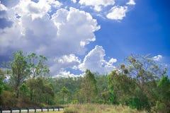 Baum-nahe gelegene Brisbane-Stadt in Queensland, Australien Australien ist ein Kontinent, der im Südteil der Erde im Sommer Tim g lizenzfreie stockfotografie