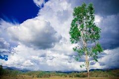 Baum-nahe gelegene Brisbane-Stadt in Queensland, Australien Australien ist ein Kontinent, der im Südteil der Erde in der Sommerze stockfotografie