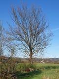 Baum nahe meinem Haus stockfoto