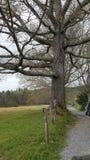 Baum Nationalpark cades Bucht in den rauchigen Gebirgs-Ost-Gebirgsgebirgswild lebenden tieren Tennessees Pigeon Forge Gatlinburg  Lizenzfreie Stockfotografie