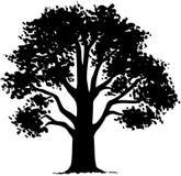 Baum-Naturblatt-Karikatur Vektor Clipart Lizenzfreie Stockfotos