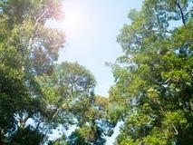 Baum Naturgrün-Urlaubansicht der Perspektive einzigartige von unterhalb des großen grünen Baums Natürliches und Umweltkonzept Stockfoto
