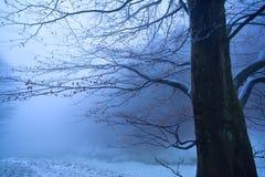 Baum am nebeligen Morgen des Winters Stockfotografie