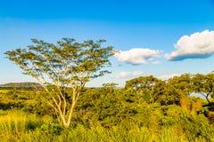 Baum neben brasilianischem Fluss ALIAS ` Rio Grande-`, gelegen bei Ubera Lizenzfreie Stockbilder