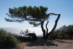 Baum neben dem Ozean Stockfoto