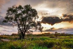 Baum neben der Straße unter Wiese im Sonnenuntergang Lizenzfreies Stockfoto