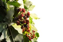 Baum neuen Jahres Blackberrys Lizenzfreie Stockbilder