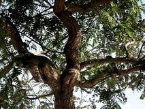 Baum, Niederlassungen und Blätter Stockbild