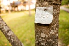 Baum Nr 893 Stockbilder