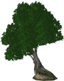 Baum oben auf die Klippe Stockfotografie