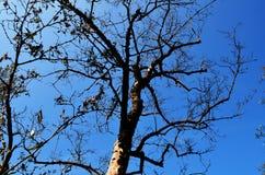 Baum oben getrocknet Stockfoto