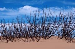 Baum-Oberseite in einer Sanddüne Stockbild