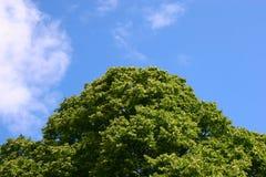 Baum-Oberseiten Lizenzfreies Stockbild