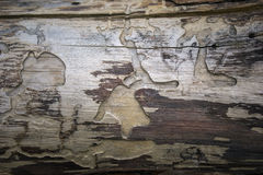 Baum ohne Barke Lizenzfreie Stockbilder