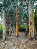 Baum ohne Barke im Park stockfoto