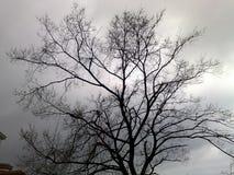 Baum ohne Blätter stockfoto