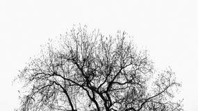 Baum ohne Blätter stockbilder