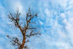 Baum ohne Blätter auf dem Hintergrund eines blauen Himmels ohne Blätter stockfotografie